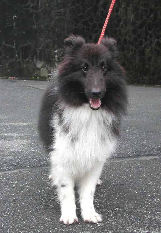 2007jackdog3